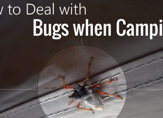 how-to-deal-with-bugs-camping