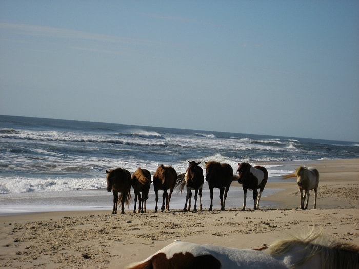 assateague-island-national-seashore