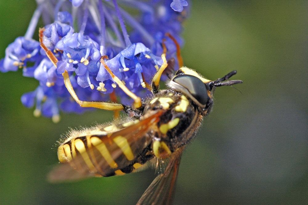 Wasp on a flower