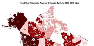 Fatal-bear-attacks-in-usa-and-canada